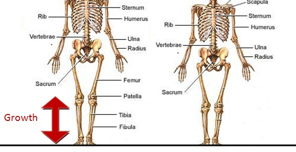 Anatomie du corps